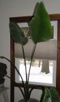 plantrescue1