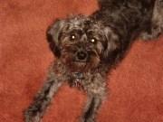 Sadie, 2005