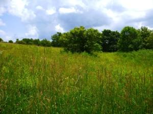 grassymeadow
